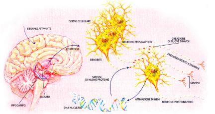 visione schematica cervello umano